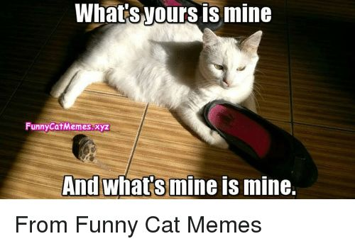 Memes 🤖 and Xyz What SNOurs is mine FunnyCat Memes xyz And whats