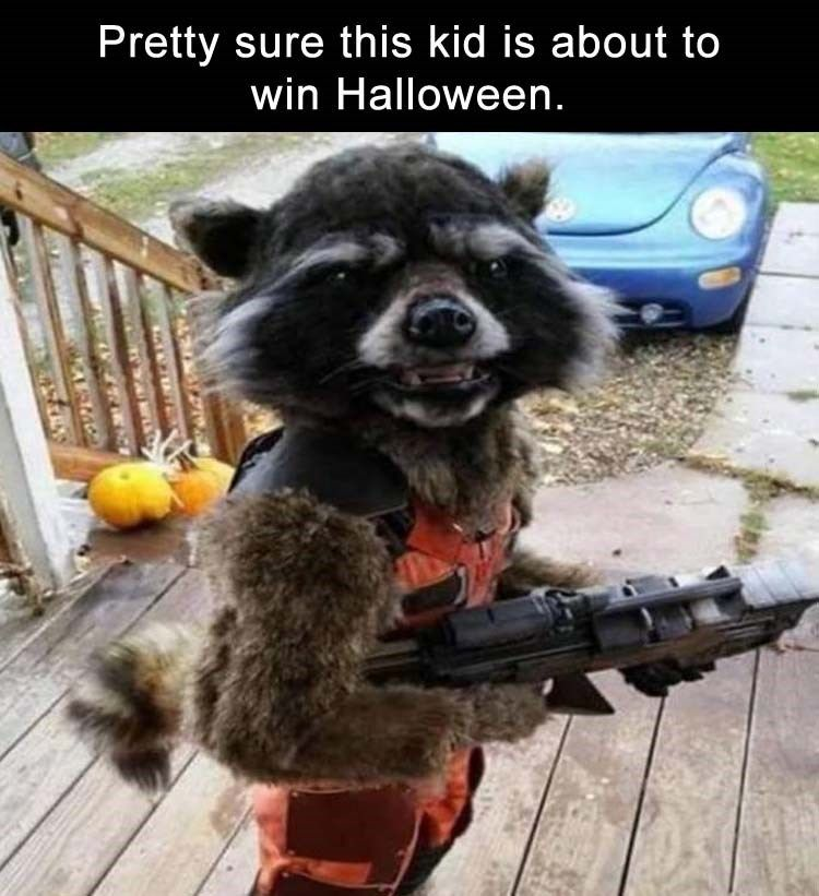 Ready For Halloween – I Can Has Cheezburger – Funny Cats Cat Meme