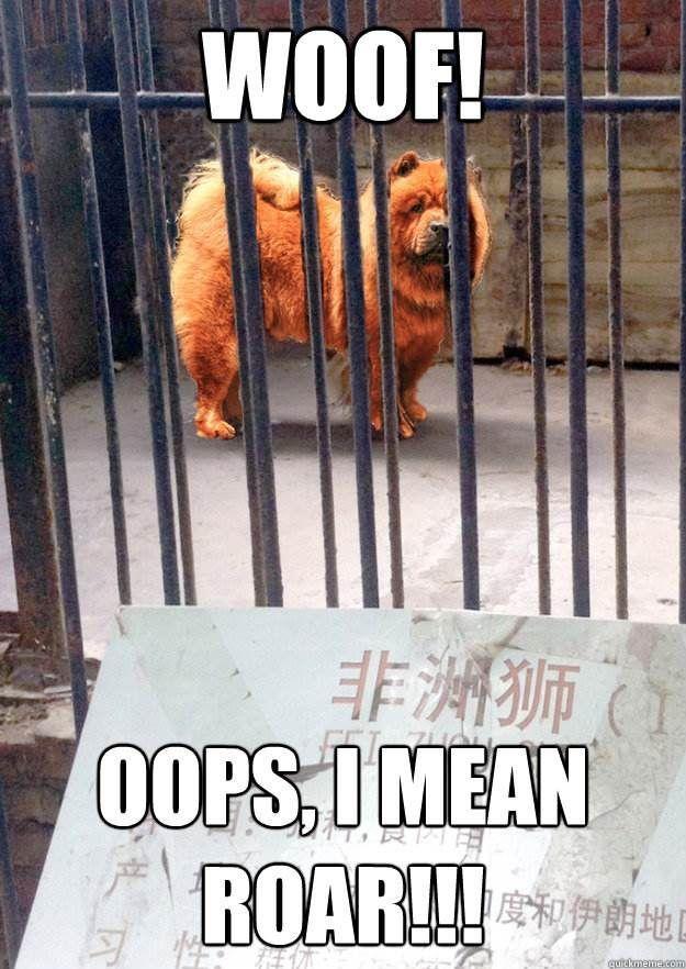 Charlie Chow Chow Meme 2