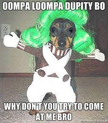 funny Oompa Loompa costume dog