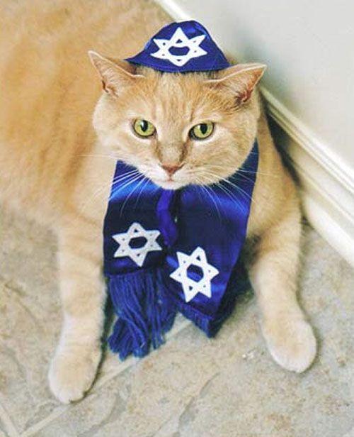 cats celebrating Chanukah
