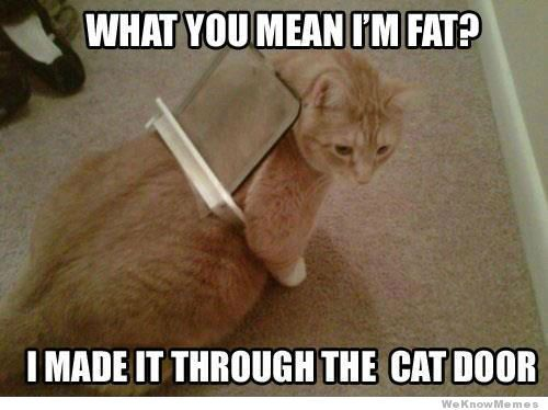 Funny Fat Cat Meme 27