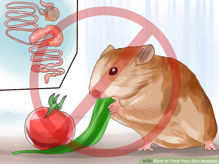 Image titled Treat Your Sick Hamster Step 7