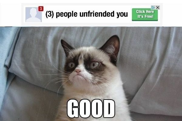 what are the funniest cat memes dec