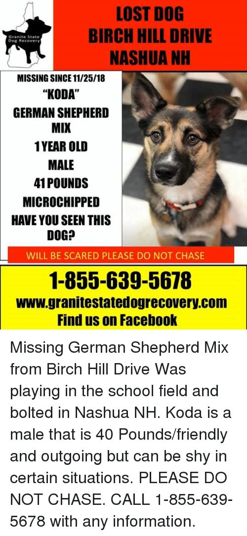 Memes and School LOST DOG BIRCH HILL DRIVE NASHUA NH Granite State
