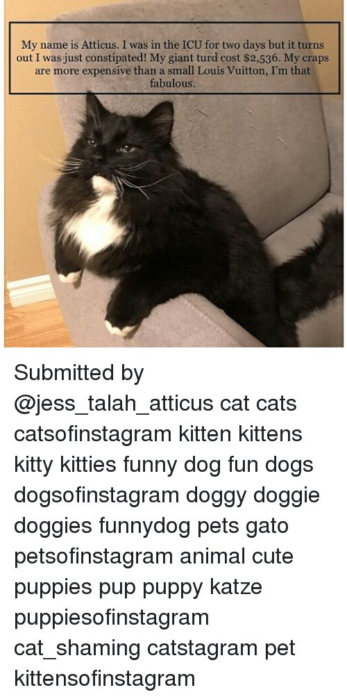 Cats Cute and Dogs My name is Atticus I was in the