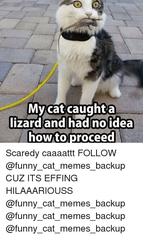 Cats Funny and Meme My cat caught a lizard and had no idea