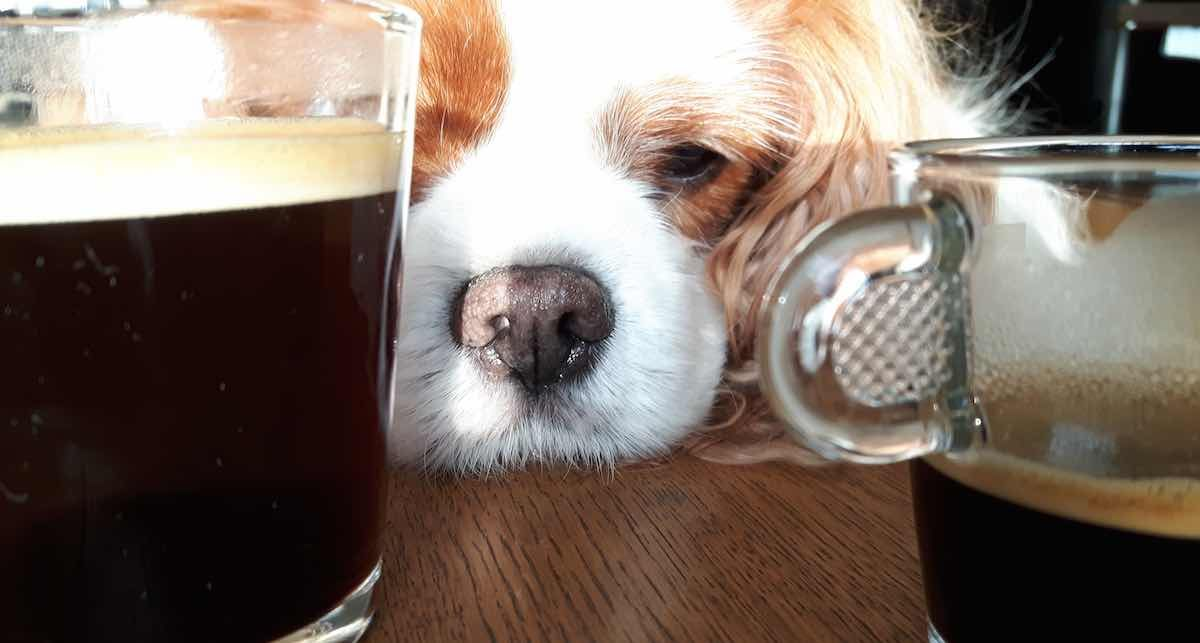 See the Stunning Pictures Of Funny Words About Coffee On Dog Pictures