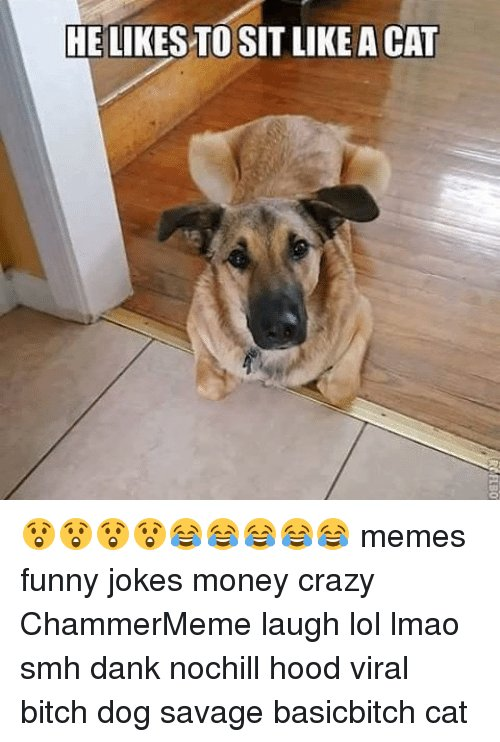 Cats Funny Jokes and Memes HELIKESTOSITLIKE A CAT 😲😲😲😲😂