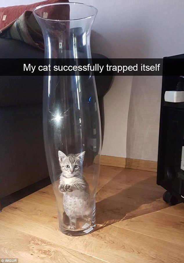 A teeny tiny kitten somehow managed to trap itself inside a large vase and was unable
