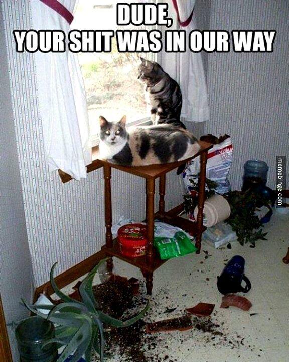 fd0d369c5cad9e0154b3180cc91d1427 funny cats funny animals