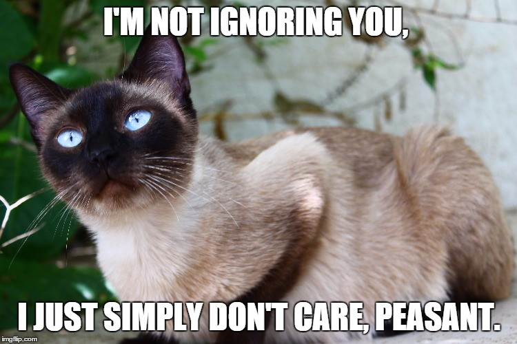 Image tagged in zoey cats snobby hilarious funny memes princess Imgflip