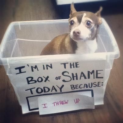 Funny pictures about Box Shame Oh and cool pics about Box Shame Also Box Shame