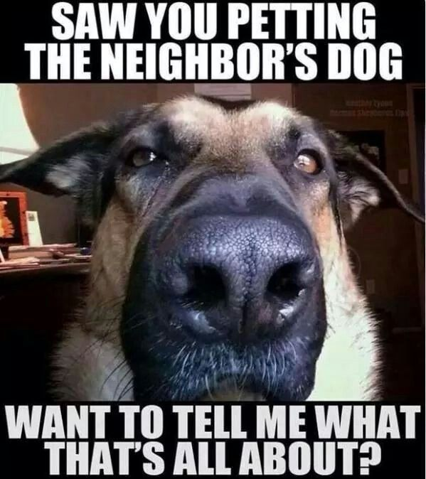 I saw you petting the neighbors dog You wanna talk about it