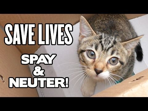 Funny Cat Videos Funny Cats Save Life Domestic Cat Marmalade