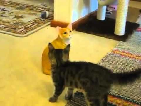 Kitten against fake cat so funny and cute great fight