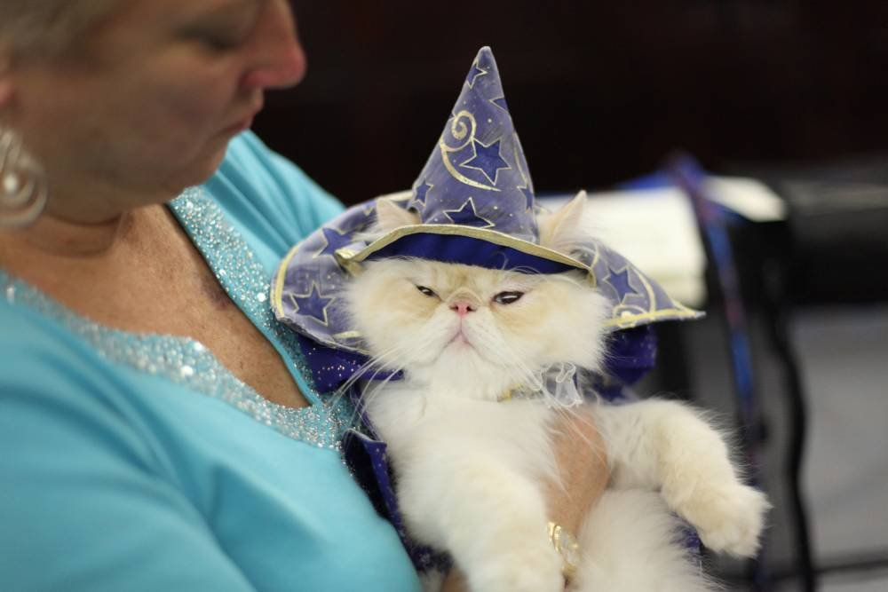This year s Algonquin hotel cat fashion show has a Broadway theme