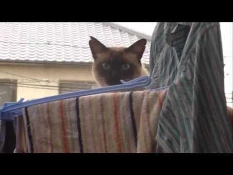 SuperCAT Cat Jump FAIL [WITH THEME SONG]