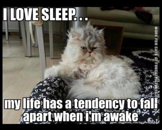 funny cat pics i love sleep