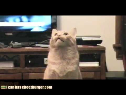 funny cat videos youtube