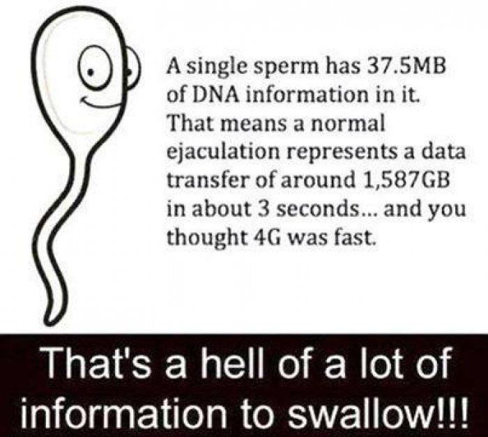 Funny sperm fact