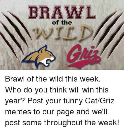 Cats Funny and Meme BRAWL of the Brawl of the wild this week