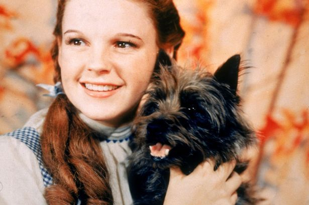 Judy Garland was just 16 when she was groped by the Munchkins Image Moviepix