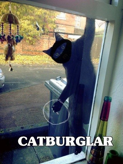 See the Unique Funny Pictures Of Cat Burglar Caught