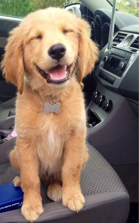 """""""RT if your dog smiles when you smile """""""