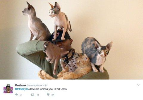 funny cat meme sphynx cats cat rapper clowder meowingtons cute internet cats