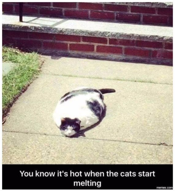 funny cats with captions
