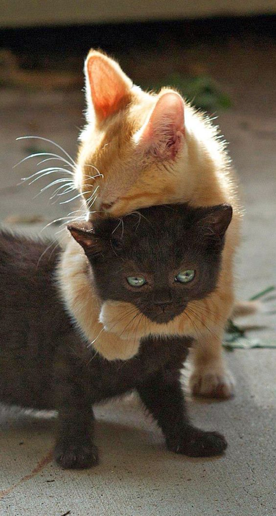 funny animal pictures cat memes Just like cat funniest animals cat fun cat funny cat cats cat cute cat stuff pretty cats beautiful cats