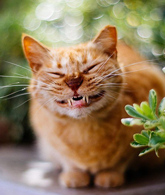 12 Cats With the Biggest Smiles Cats Tips & Advice