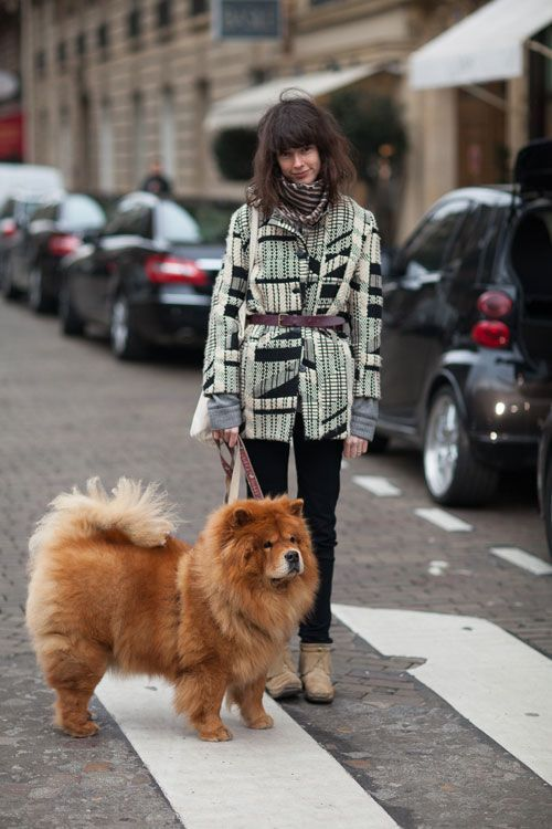 Street Style Fall 2013 Paris Fashion Week Chow Chow DogsOld