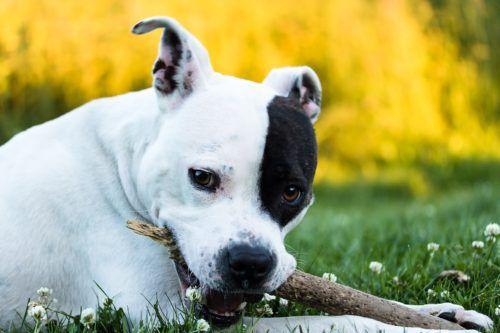 benadryl for dogs canna pet