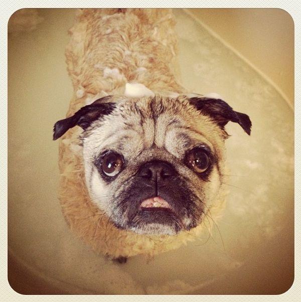 dogsofinstagram embed