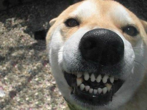 I ll show you mine if you show me yours Funny Dog Pics