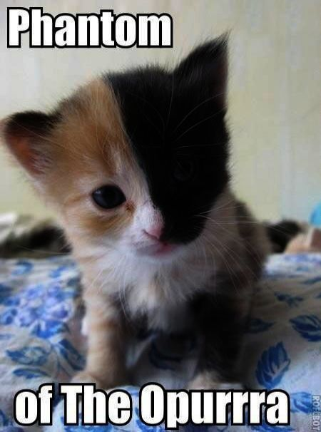 Cute Cats Memes Cute Kittens Overload Funny cats Pinterest