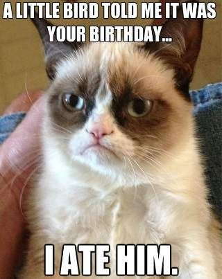 Take the Awesome Funny Birthday Cat Memes