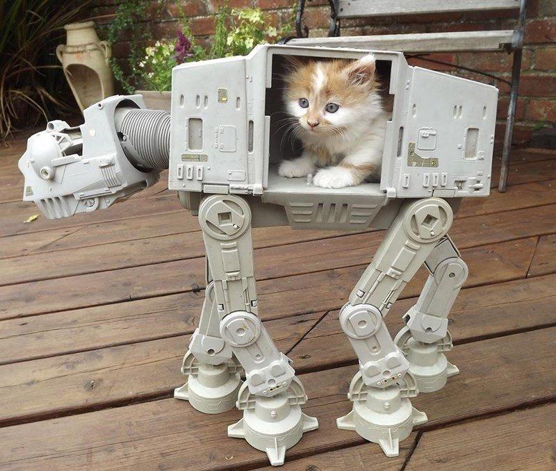 cat at