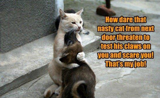 cat job threaten scare nasty next door my test caption claws
