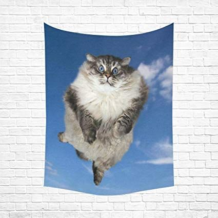Take the Awesome Funny Cat Pictures 80 X 80