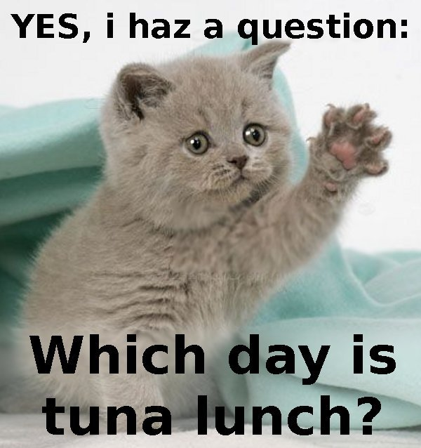 Take the Awesome Funny Cat Pictures Questions