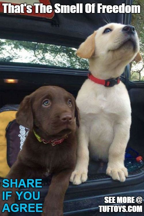 Two funny cute puppies are freed from the trunk of their car and reminded once again of the great outdoors