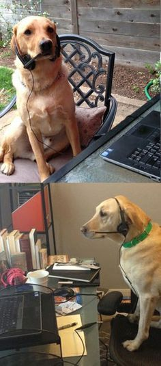 We love our furry friends Any day can be PetsAtWork Day when you have