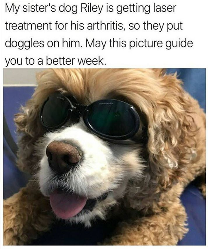 Take the Awesome Funny Dog Monday Memes