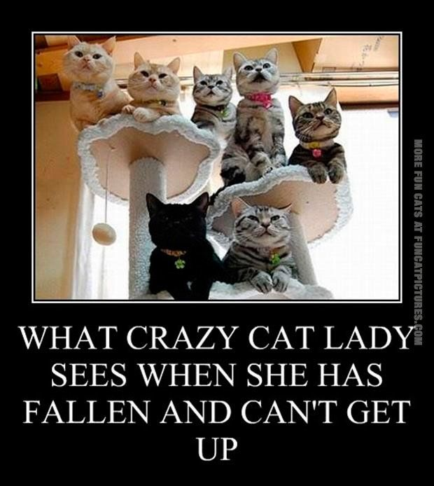 Funny Crazy Cat Lady