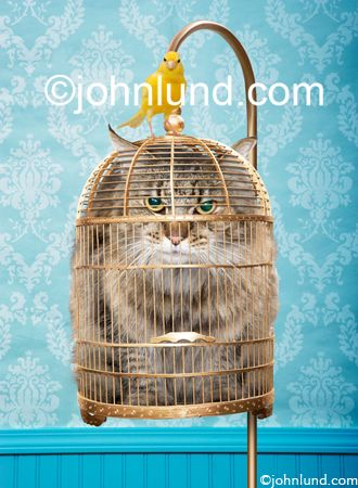 Funny Cat pictures A cat looks miserable stuffed in a bird cage in this funny animal antics and stock photo