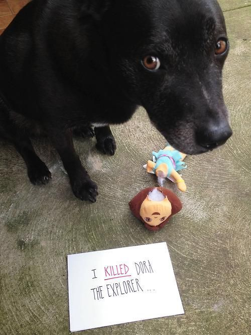 Dog shaming this is so funny about time a dog eats something you won