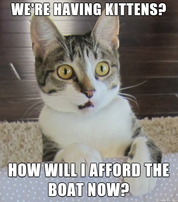 Realization Cat Meme